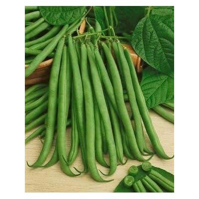 100 Seeds- Top Crop Sting-less Bush Beans : Garden & Outdoor