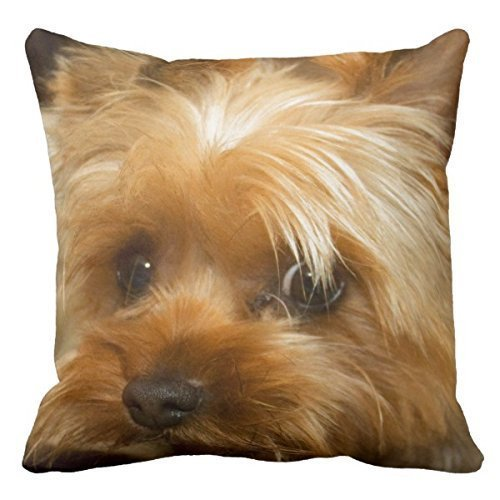 - DECORLUTION Wait For Mom Love Haley Dog Yorkie Terrier Throw Pillow Cases Square Cotton Decorative Throw Pillow Case Decor Cushion Covers (20inchx20inch)