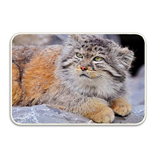 Animal Pallas Cats Colors 16