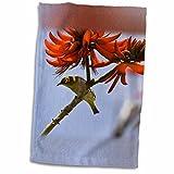3dRose Danita Delimont - Birds - Japanese White-eye bird, Hawaii - US12 RBE0003 - Ralph H. Bendjebar - 12x18 Towel (twl_89857_1)