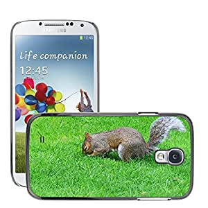 GoGoMobile Slim Protector Hard Shell Cover Case // M00123317 Grey Squirrel Burying Nut Rodent // Samsung Galaxy S4 S IV SIV i9500