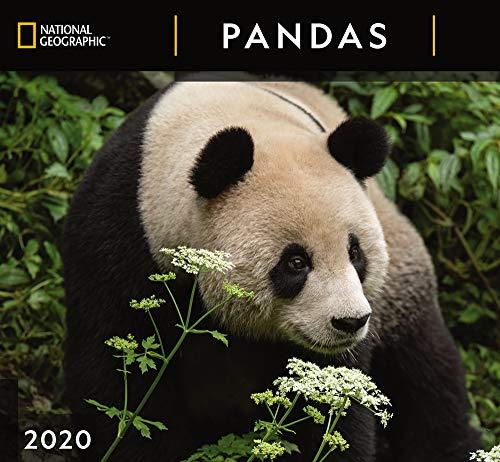 National Geographic Pandas 2020 Wall Calendar