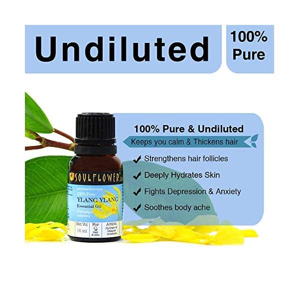 Soulflower Ylang Ylang Oil for Voluminous Hair and Skin Care, 15ml Perfumes