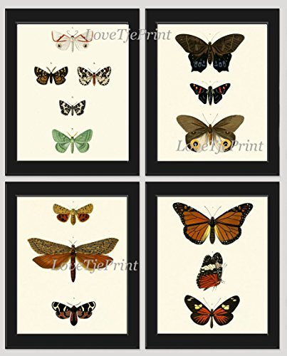 (Butterfly Print Set of 4 Prints Antique Art Beautiful Colored Colorful Green Graden Nature Natural Science Chart Poster Home Room Wall Decor Unframed ODB)