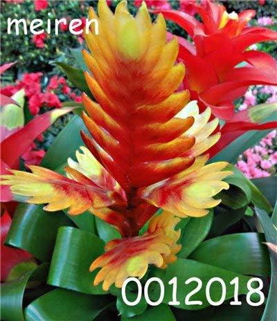 Pinkdose 100 Piezas Bonsai Plantas de bromelias Raras Vegetales y Frutas Jardín Plantas suculentas Mini macetas de Cactus Arco Iris Bonsai para niños Flor: 5: Amazon.es: Jardín