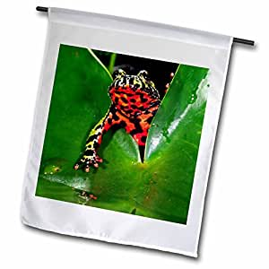 fl_83808_1 Danita Delimont - Toads - Fire Belly Toad, Native to China - NA02 DNO0112 - David Northcott - Flags - 12 x 18 inch Garden Flag