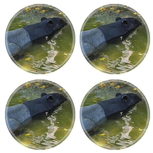 Liili Round Coasters IMAGE ID 13557758 tapir wild adult male in river corcovado national park costa - Mal Meadows Park