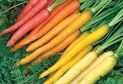 Rainbow Carrot Seeds - Non-GMO