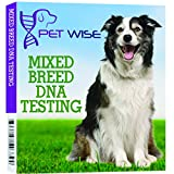 Dog DNA Breed Identification by Go Pet Wise