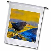 Danita Delimont - Birds - Oregon, American Dipper bird, Salmon egg - US38 GLU0000 - Gary Luhm - 18 x 27 inch Garden Flag (fl_93771_2)