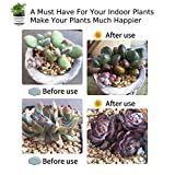 Grow Light Plant Lights for Indoor Plants LED