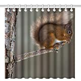 Wknoon 72 x 72 Inch Shower Curtain,Nature Wildlife Animal Squirrel on the Rustic Wood Branch,Waterproof Polyester Fabric Decorative Bathroom Bath Curtains
