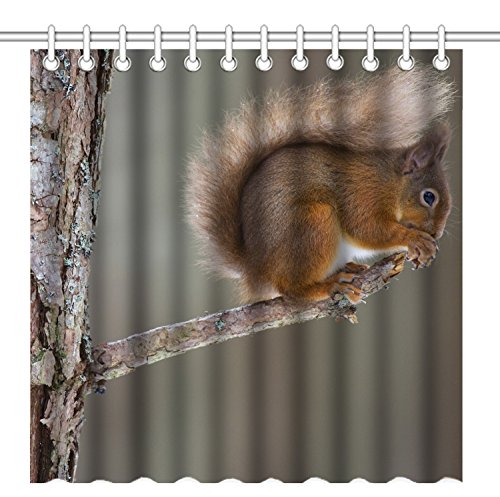 Wild Animals Polyester Shower Curtain - Wknoon 72 x 72 Inch Shower Curtain,Nature Wildlife Animal Squirrel on the Rustic Wood Branch,Waterproof Polyester Fabric Decorative Bathroom Bath Curtains