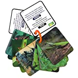 Animal Planet 3D Flash Cards - Bugs