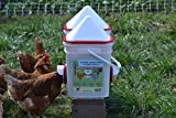 Chicken Feeder-Holds 20