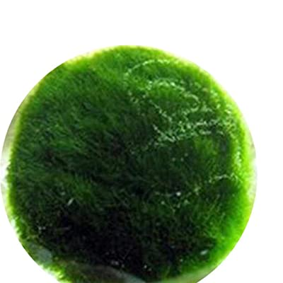 Adidome 100pcs/ Bag Spherical Water Grass Seeds Water Herb Plants Aquatic Plants : Garden & Outdoor