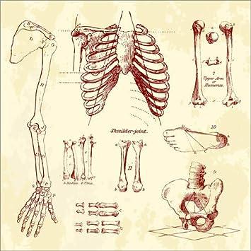 Posterlounge Holzbild 70 x 70 cm: Knochen im menschlichen Körper von ...