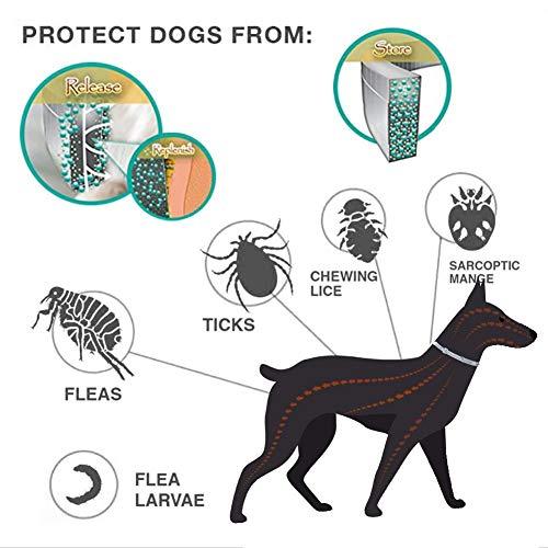 Collar Antiparasitos Perros/Gatos contra Pulgas,Garrapatas y Mosquitos,Tamaño Ajustable e Impermeable para Mascota Pequeño Mediano Grandes: Amazon.es: ...