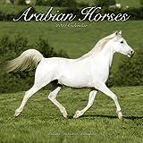 Arabian Horse Calendar - Calendars 2017 - 2018 Wall Calendars - Only Arabian Horses - Animal Calendar - Arabian Horses 16 Month Wall Calendar by Avonside