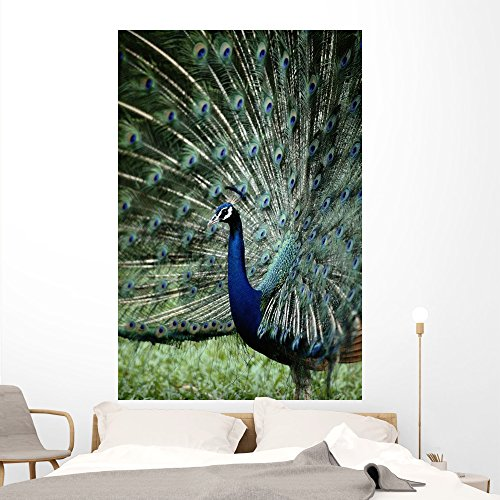 Cheap  Male Peacock Wall Mural by Wallmonkeys Peel and Stick Graphic (72 in..
