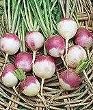 Heirloom Purple White Top Turnip Seed by Stonysoil Seed Company