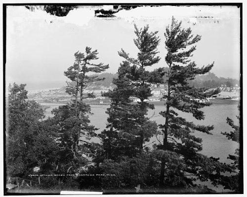 Photo: Ottawa Beach,Macatawa Park,trees,Michigan,MI,Detroit Publishing Company,1890