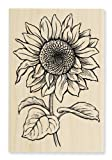 Stampendous Wood Handle Stamp, Sweet Sunflower