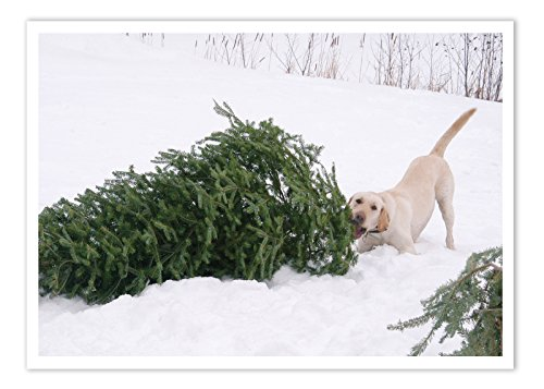Palm Tree Holiday Card - Palm Press Inc. - Christmas Cards- Dog Pulling Tree - 12 Holiday Cards & Envelopes - Printed in USA
