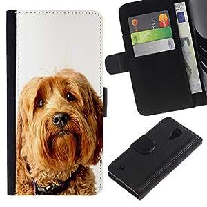 Billetera de Cuero Caso del tirón Titular de la tarjeta Carcasa Funda del zurriago para Samsung Galaxy S4 IV I9500 / Business Style Labradoodle Terrier Yellow Fur Dog