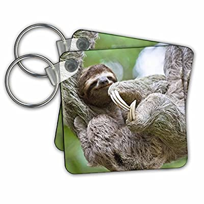 Kc_87172 Danita Delimont - Wildlife - Brown-Throated Sloth Wildlife, Corcovado Costa Rica - Sa22 Jgs0021 - Jim Goldstein - Key Chains -
