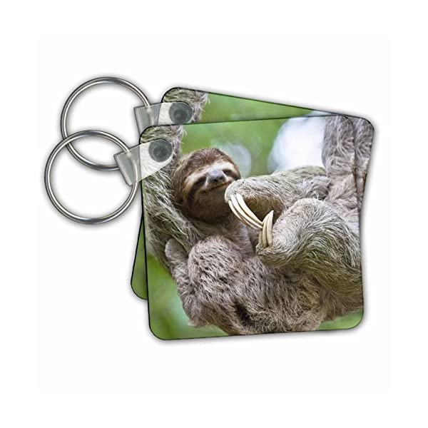 Kc_87172 Danita Delimont - Wildlife - Brown-Throated Sloth Wildlife, Corcovado Costa Rica - Sa22 Jgs0021 - Jim Goldstein - Key Chains -