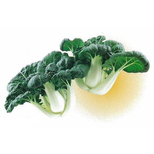 葉菜類 種 ミニパクチョイロンフー 2dl B00NHD3SME