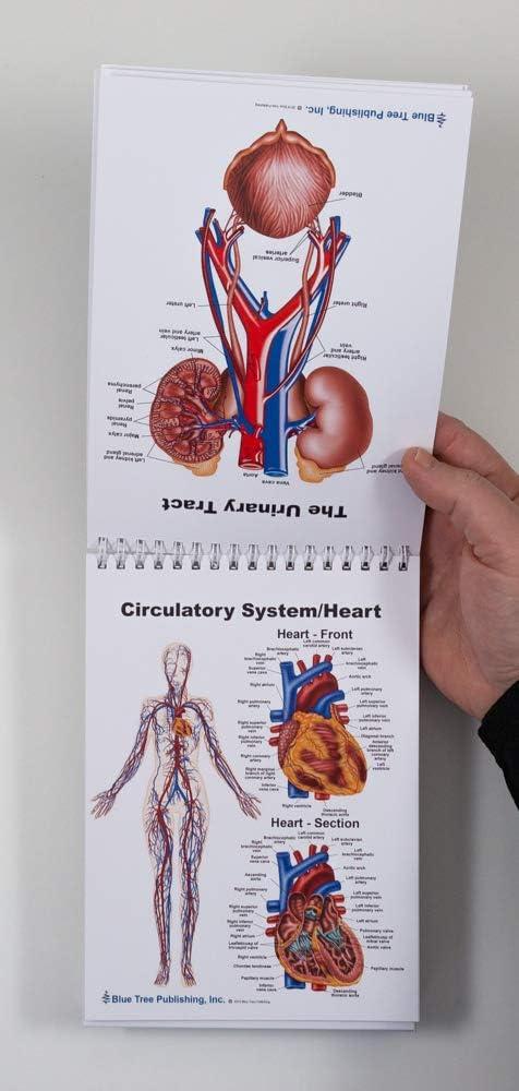 Female Anatomy and Reproductive Flip Charts