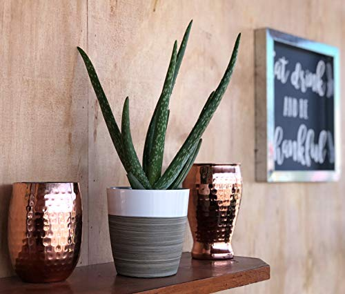 Aloe Vera with white planter
