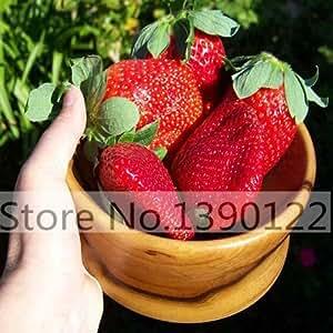 300/bag Giant Strawberry Seeds, Rare, Big as a Peach, Fragaria ananassa L Maximus Strawberry fruit seeds for home garden