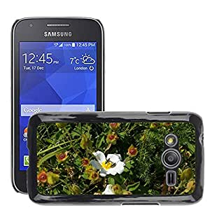 GoGoMobile Slim Protector Hard Shell Cover Case // M00118830 Rockrose Cistus Monspeliensis Flower // Samsung Galaxy Ace4 / Galaxy Ace 4 LTE / SM-G313F
