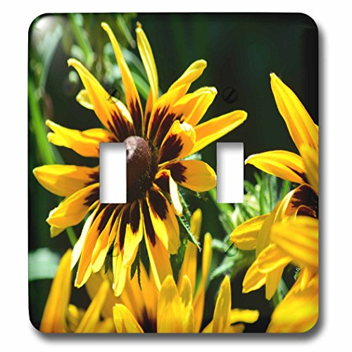 3dRose Beverly Turner Flora Photography - Blacked Eyed Susan Flowers - Light Switch Covers - double toggle switch - Blacked Double