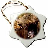 3dRose Danita Delimont - Cattle - India. Gaur, Kanha tiger reserve, Indian wild bison. - 3 inch Snowflake Porcelain Ornament (orn_276804_1)
