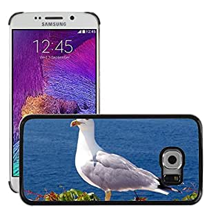 Super Stella Slim PC Hard Case Cover Skin Armor Shell Protection // M00105318 Seagull Bird Sea Water Bird Animal // Samsung Galaxy S6 EDGE (Not Fits S6)