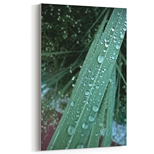 (Westlake Art - Water Tree - 12x18 Canvas Print Wall Art - Canvas Stretched Gallery Wrap Modern Picture Photography Artwork - Ready to Hang 12x18 Inch (D41D8))