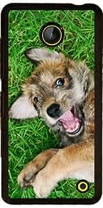 Funda para Nokia Lumia 630 - Perro Lindo Perrito Picard Del Berger by Katho Menden
