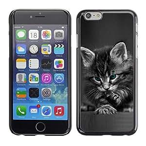 TECHCASE**Cubierta de la caja de protección la piel dura para el ** Apple iPhone 6 Plus 5.5 ** Cute Paw Kitten Whiskers Grey Baby Cat