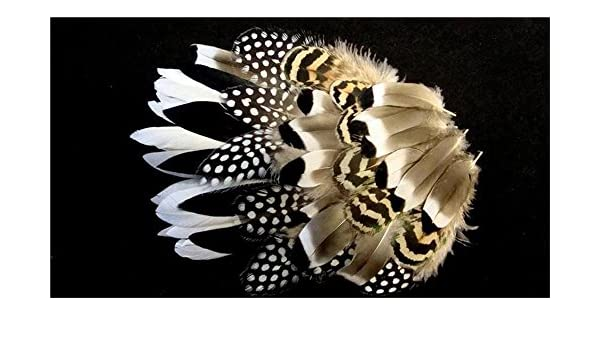 Guinea Mix 8 Duck Cosse Wings /& Black Tips Peacock Plumage Feathers-US Seller