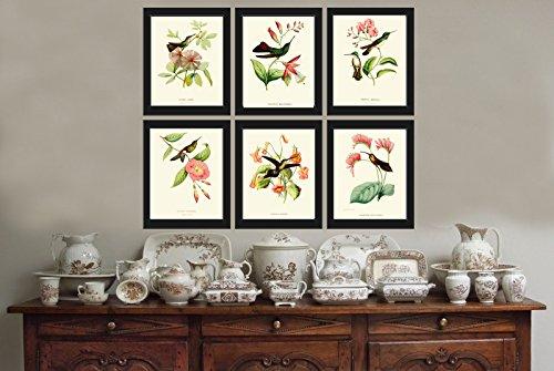 Hummingbirds Botanical Beautiful Tripical Illustration product image