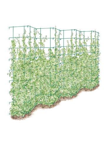 Amazon Tall Expandable Pea Trellis Trellises Garden & Outdoor