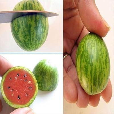 Chic Fruit Seeds 10PCS Mini Watermelon Red Miniature Cucamelon Yard Garden Plant