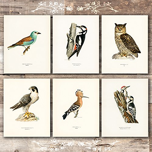 Vintage Bird Art Prints - (Set of 6) - Unframed - 8x10s | Bird Wall Decor