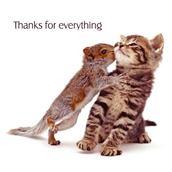 Image result for thank you cute animal