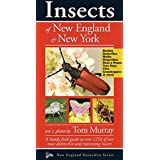 Insects of New England & New York (Naturalist Series)