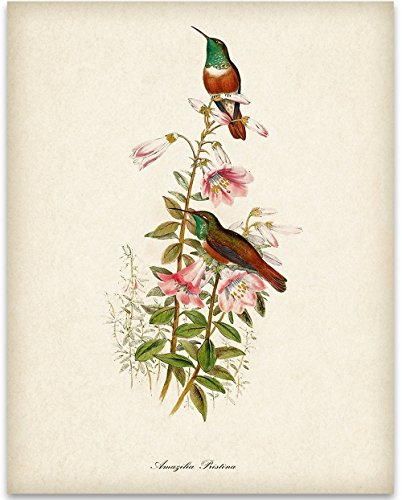 Two Hummingbirds Art Print - 11x14 Unframed Art Print - Great Home Decor and a Great Gift for Bird ()